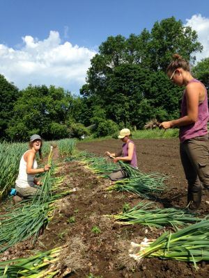 Anna, Erinn, Janelle, and the early season garlic.